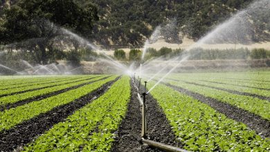 Photo of عارضه یابی وضعیت مصرف حامل های انرژی و آب در بخش کشاورزی